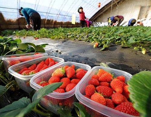 草莓亚虎官方平台亚虎官网登录手机版