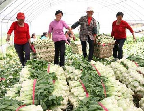 蔬菜亚虎官方平台亚虎官网登录手机版