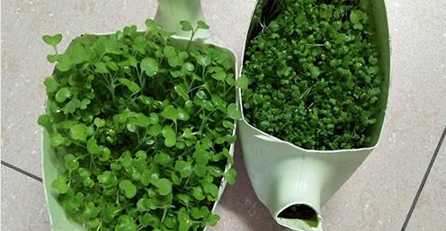 荣森-绿色生物菌肥